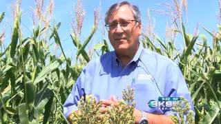 New developments in irrigation-Molly