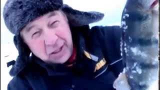Ловля окуня зимой на Южной Ладоге