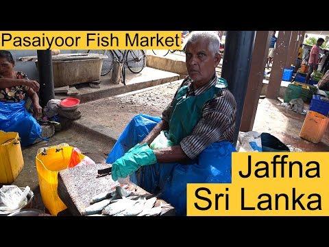Jaffna Pasaiyoor Fish Market Sri Lanka E1