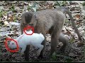 This monkey play with rabbits
