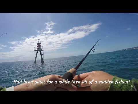 Mackerel Fishing - Moreton Bay 03 - 11-2017