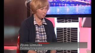 Попутчик - Перевозка домашних животных в автомобилях 26.09.2011