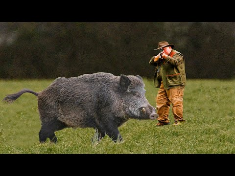 Hunting For Wild Boar! Selection Videos of Real Hunt. Best Collection 2021
