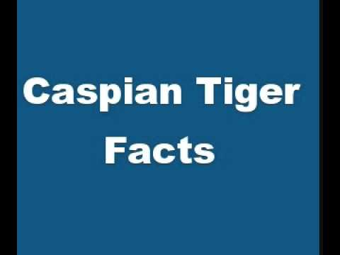 Caspian Tiger Facts - Facts About Caspian Tigers