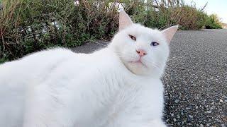 カリン様みたいな白猫をモフったら、サイヤ人並の戦闘力で攻撃された