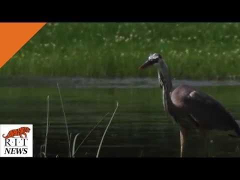 Wetlands in 30