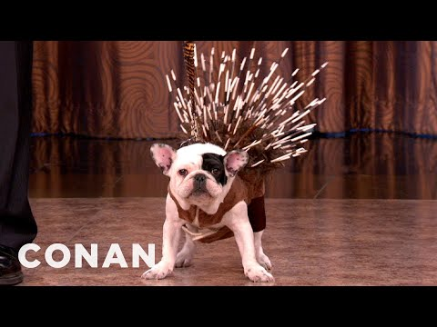 All-New Dog Breeds From American Kennel Club - CONAN On TBS