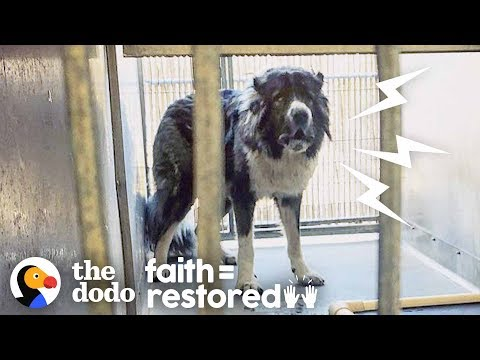 Watch What Happens When a Woman Tries to Befriend This Aggressive Dog | The Dodo Faith = Restored