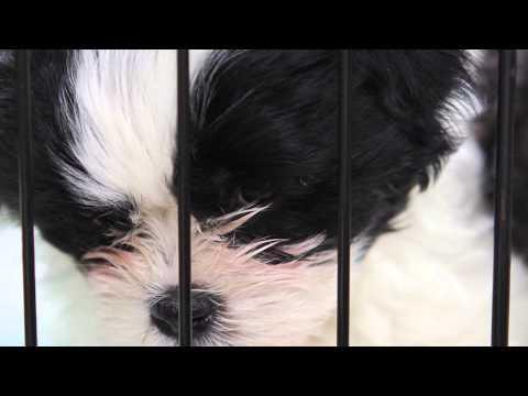 The Behavior Of Puppy Mill Dogs : Dog Training & Behavior