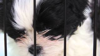 The Behavior Of Puppy Mill Dogs : Dog Training & Behavior