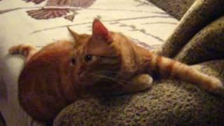 Странные позы моего кота Кузьмы часть 1