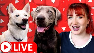 Live: Raw Dog Food Meal Prep With Me!