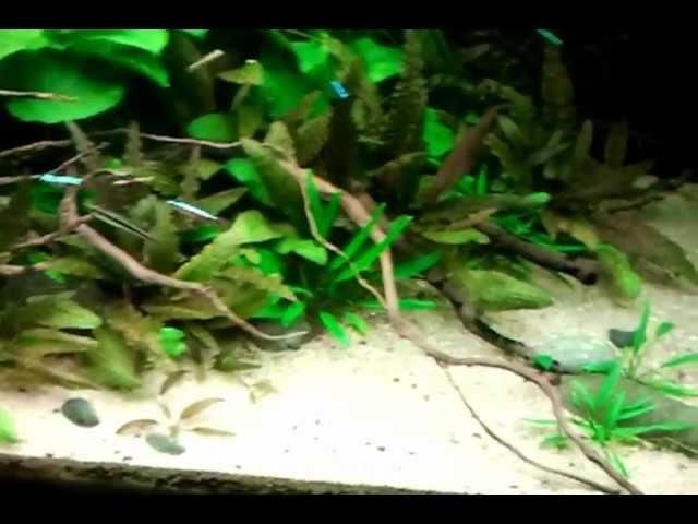 aquarium led verlichting voordelen tips bij aanschaf