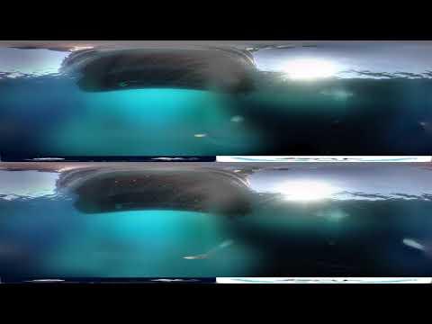 [VR video] Underwater blue shark in Portugal 360