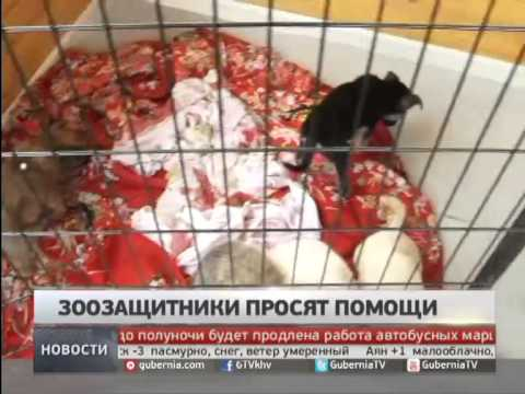 Приют для животных может закрыться. Новости. GuberniaTV