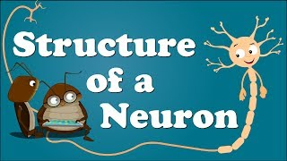 Structure of a Neuron | #aumsum #kids #education #science #learn