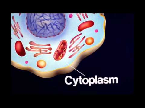 Everything You Need to Know about CELLS - Mfilms EDU