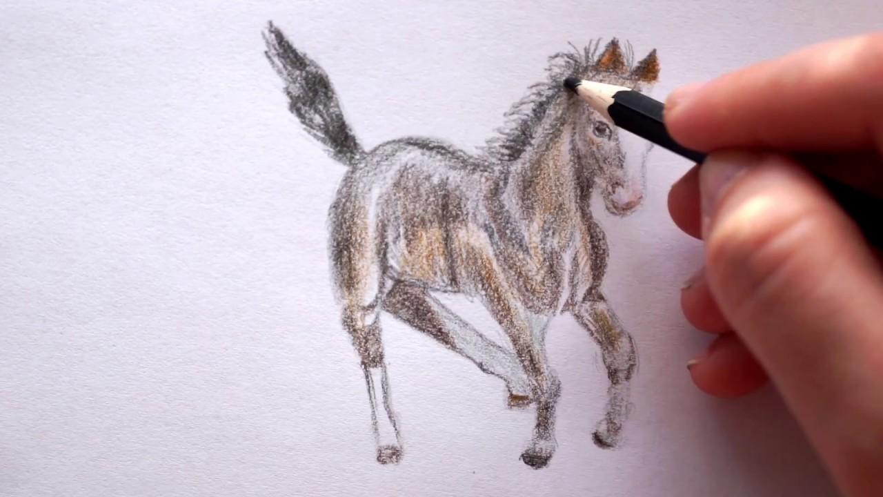 34 pferde bilder zum nachzeichnen  besten bilder von