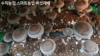 수직농업 스마트농업 버섯재배장치 스마트팜 ROTA버섯재…