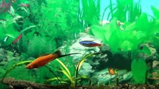 Water World 86  Интересная находка в сорокалитровом аквариуме