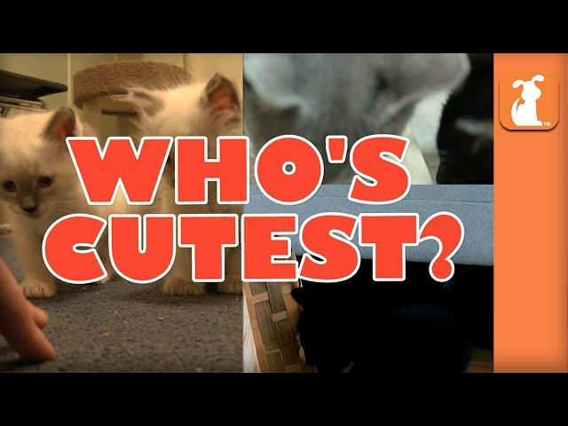 WHO'S CUTEST? YOU DECIDE! Which Kitten Is Cutest? (Episode 8)