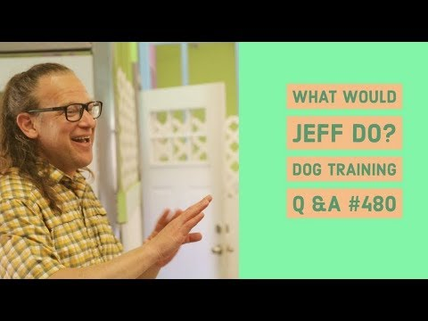 Counter Surfing Dogs | Dog Pulls on Walks | What Would Jeff Do? Dog Training Q & A #480