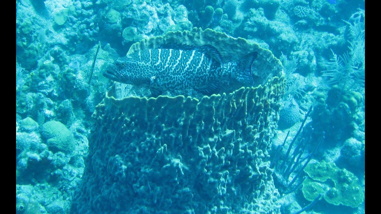 Family Snorkeling Roatan Honduras Youtube