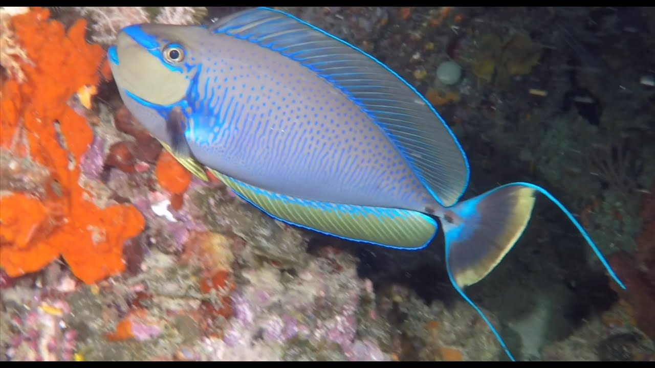 Amazing Indonesian Scuba Diving from North Sulawesi and Raja Ampat, West Papua