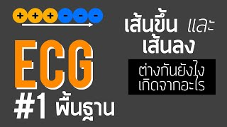 ECG #1: พื้นฐานอีซีจี | Basic ECG/EKG (with 2 Question Examples)