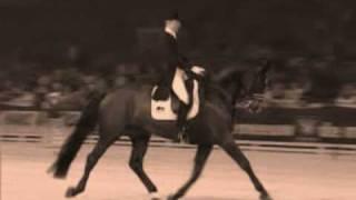 Horses - Infinity