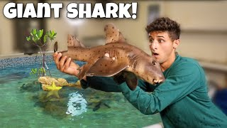 Rescuing A SHARK For My EXOTIC Saltwater POND!!