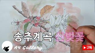 [Botanical art] 송추계곡에서 만난 산 벚꽃…