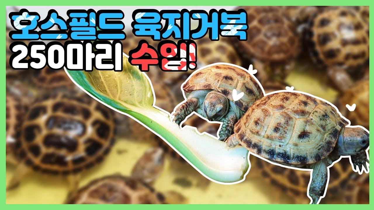 줄스는 한국에서 육지거북을 가장 많이 수입했습니다