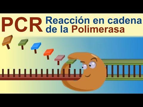 PCR: Reacción en Cadena de la Polimerasa (IQOG-CSIC)