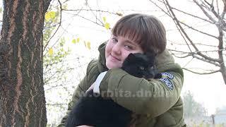 Черные коты приносят счастье