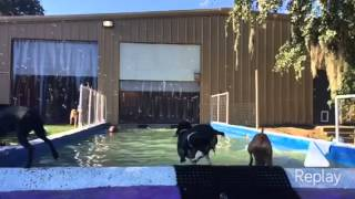 Pooch Palace North, Charleston Sc Dog Daycare And Boarding Highlights