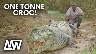 Matt Wright feeding his huge, ONE TONNE CROC called Tripod!