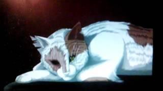 Фото коты воители
