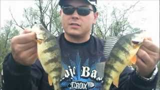 Jumbo Perch fishing Bass style