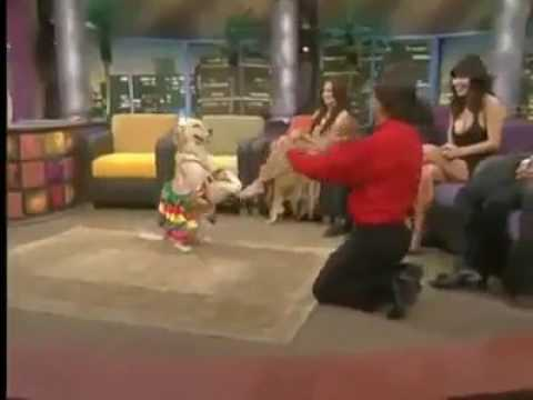 Amazing dog dance must watch this video and also like