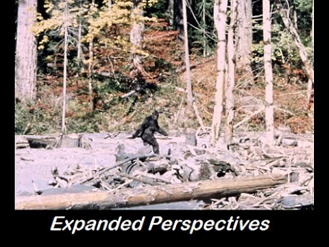 Steven Cambian - Truthseekers Episode 0029, The Patterson Gimlin film, real or hoax? Hqdefault