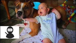 Babies and Dogs 🐶👶 Babies and Dogs Funny Moments (Full) [Epic Laughs] 2018