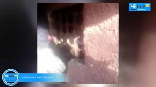 В Чернигове провели необычную спасательную операцию