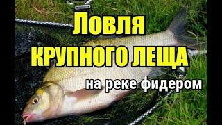 ТРОФЕЙНЫЙ ЛЕЩ Ловля КРУПНОГО ЛЕЩА на реке фидером Рыбалка в Беларуси 2021 Рыбалка на Березине