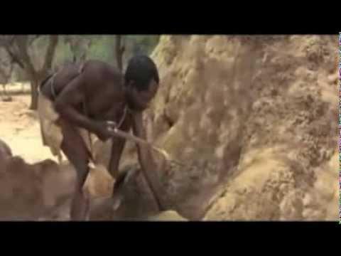 Educación Financiera. Como atrapan a los monos.