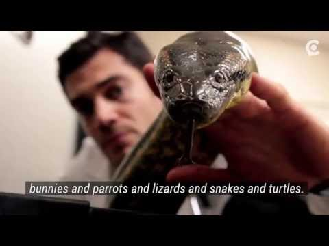 Instagram's Hottest Vet Treats Snakes and Elephants, and We Spent a Day With Him