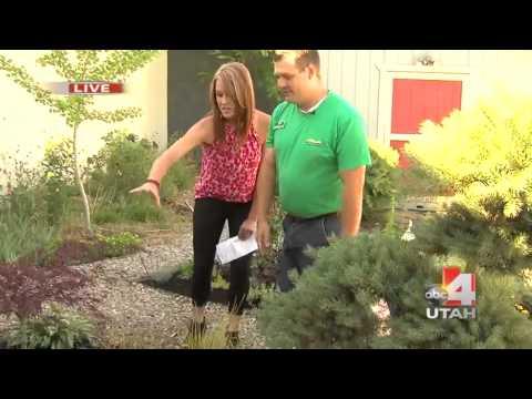 Plant Nursery   Salt Lake City, Utah   Millcreek Gardens