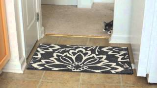 Luna the Muted Calico Cat - stalking a wand toy