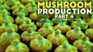 Mushroom Production Part 4 : Planting on Substrate and Mushroom Production | Agribusiness