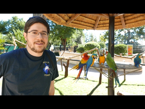 Bird Park at Montecasino in South Africa